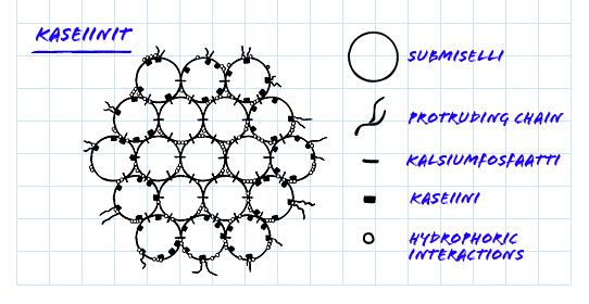 kaseiinin rakenne