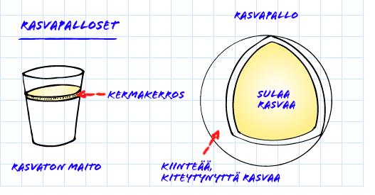 kuvas rasvapallon anatomiasta
